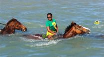 Horse Back Ride and Swim