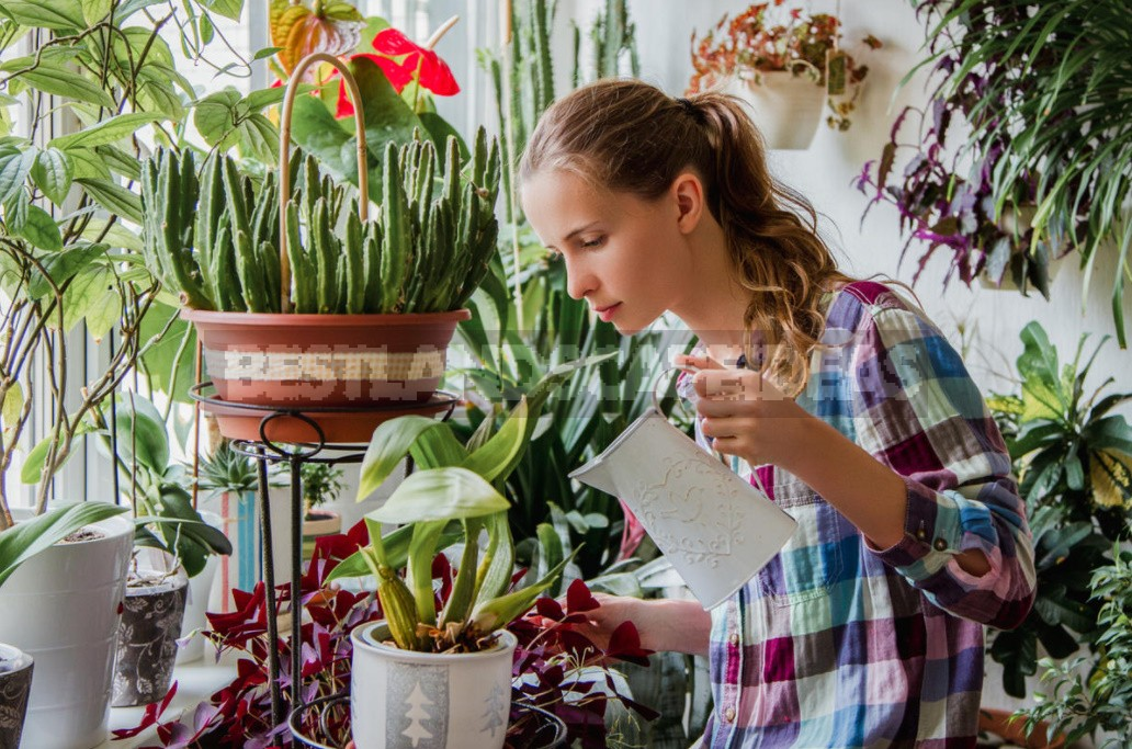 Indoor plants care tips for novice gardeners 1