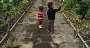 Kawatsura Strawberry Farm