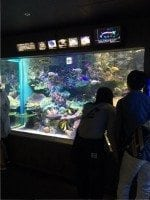 Sunshine Aquarium, Tokyo with Kids Zoos and Aquariums