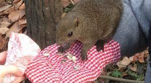 Squirrel Park, Machida, Tokyo