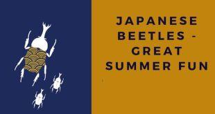 Japanese Beetles - Japan Summer Fun with Kabuto and Kuwagata Mushi