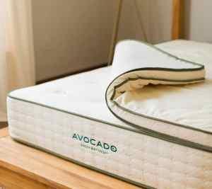 avocado hybrid