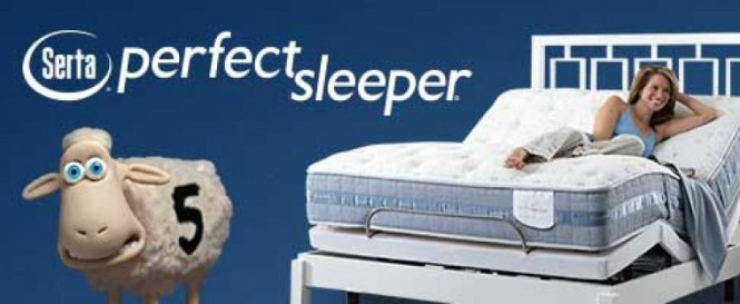 Top 10 Best Serta Mattress S Which One Is For You Dog Beds