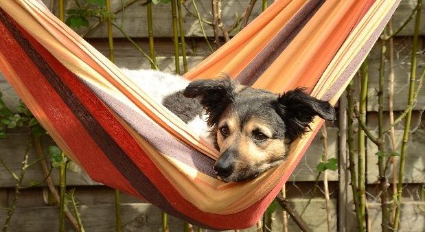 different-types-of-hammocks