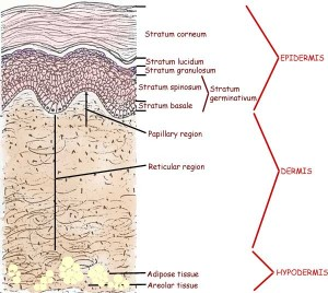 Layers of skin, chemical peel