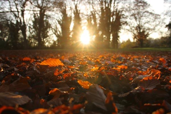 bristol autumn