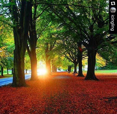 bristol sun through trees