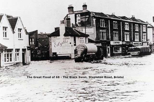 black swan floods