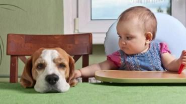 NJ Family-Babysitting little girl with dog