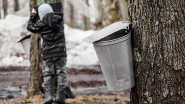 Maple Sugaring Events, NJ, Families