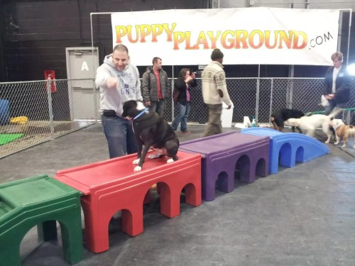 Super Pet Expo Puppy Playground