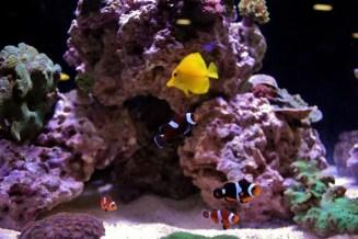 Reef-A-Palooza