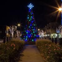holiday tree lighting, tree lighting