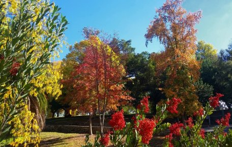Fall Colors in Peck Park