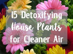 Detoxifying Plants
