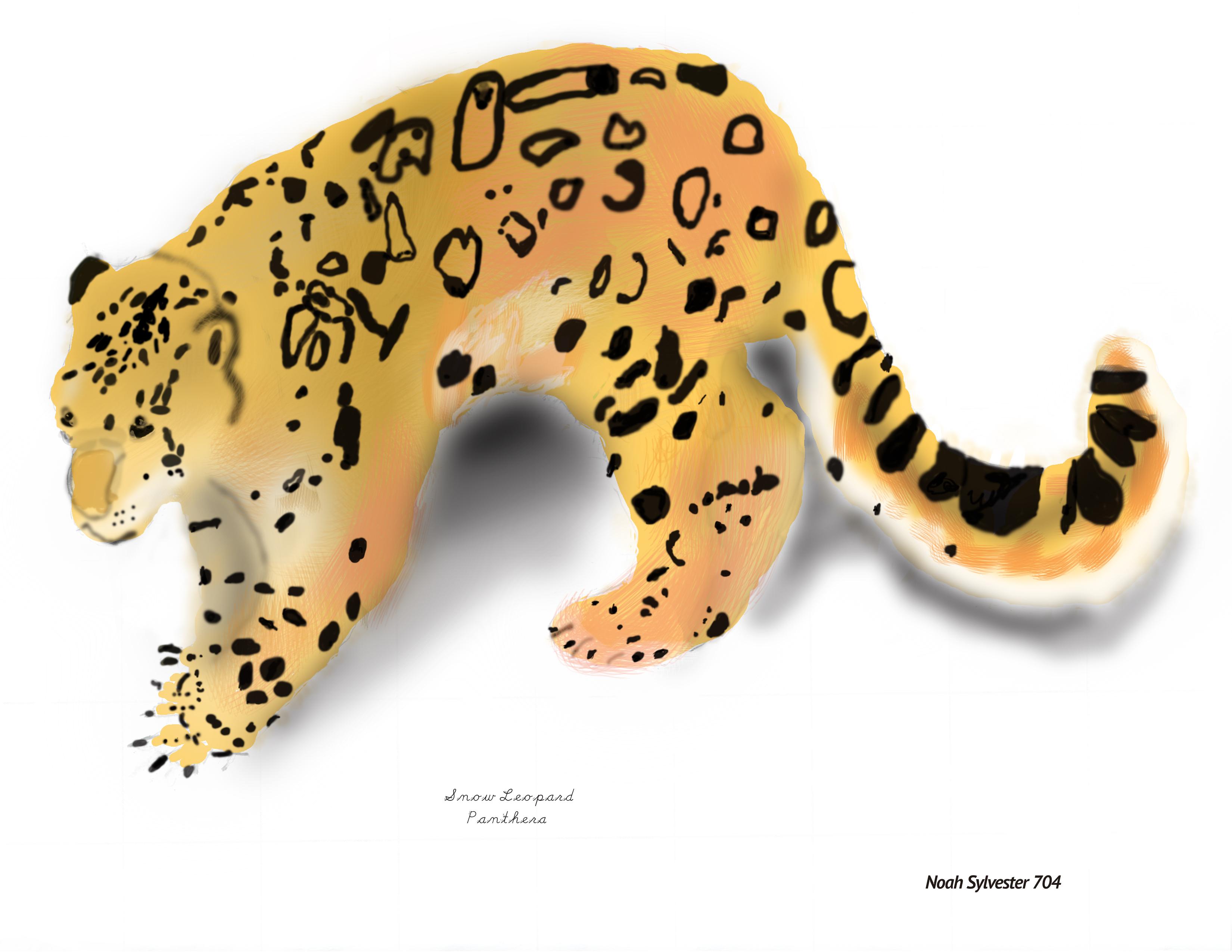 Snow Leopard 7th Grade Graphic Artwork