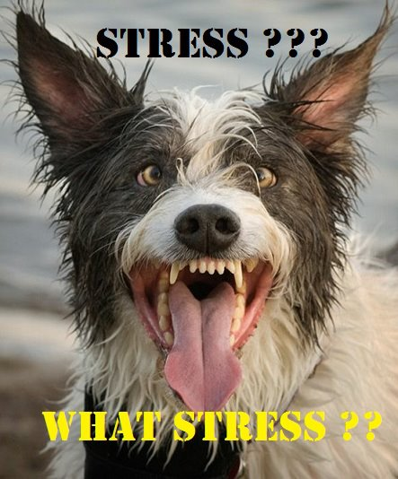 Stressed Out Dog