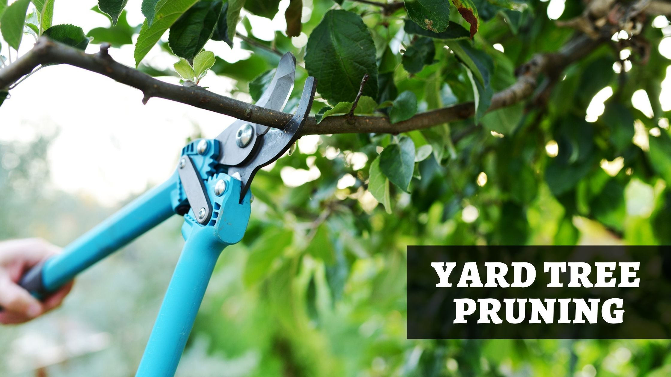 Tree Pruning: How and When to Prune Your Yard Trees? 2021