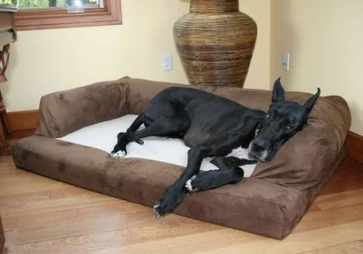 Xxl Dog Bed Orthopedic Foam Sofa Couch Review