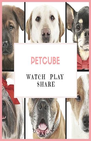 Petcube watch play share