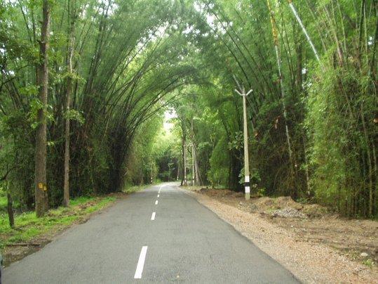 Wayanad Bamboo Road