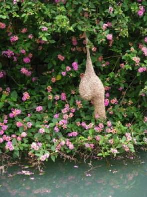 Yelagiri Hills Adventure Camp, amazing bird nest