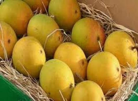 Alphonso mangoes (courtesy www.mangosmumbai.co.in)