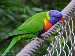 1280px-Australian_Birds_@_Jurong_Bird_Park_(4374195521)