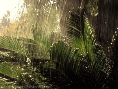 The Feel Of Rain