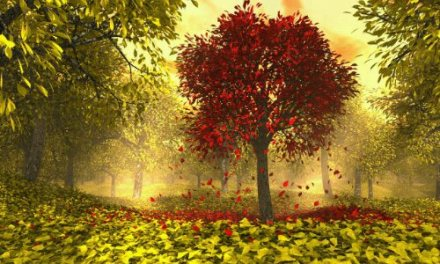 Nurture Yourself – Peacefully with Nature
