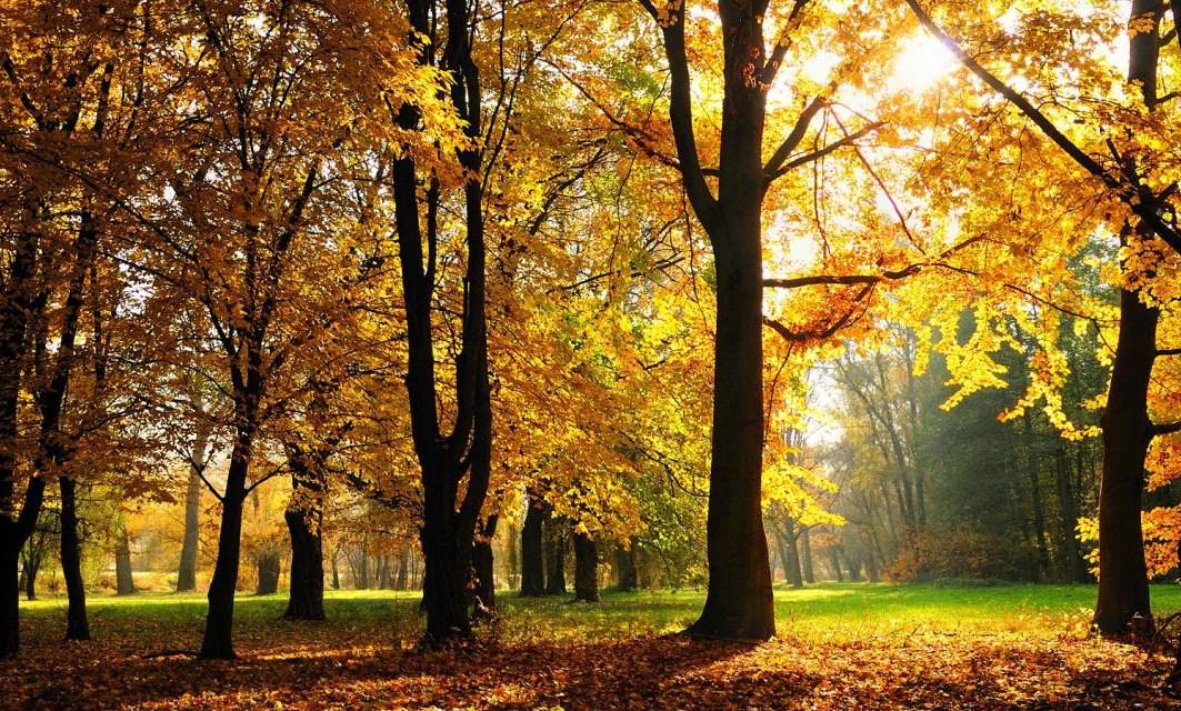 Seasons in India