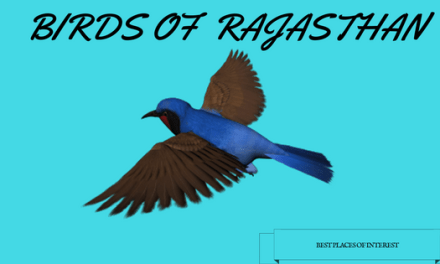 The Birds of Bikaner, Rajasthan