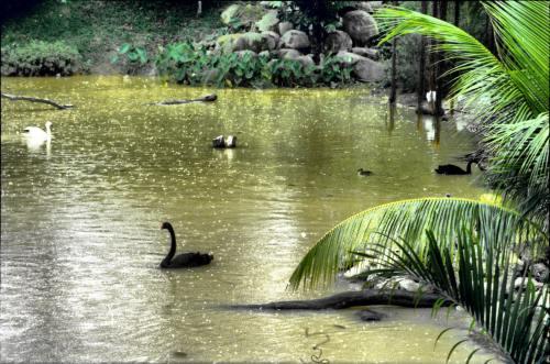 Jurong Bird Park, Singapore attractions