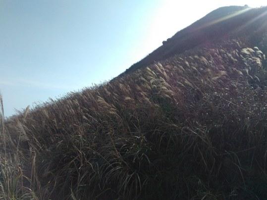Lantau Trail Section 2 - Silver grass | by ystsoi Hong Kong