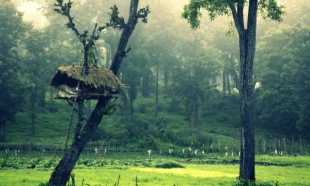 Things to tick-off your Bucket List in Kerala