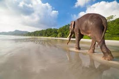 Elephant Beach - One of the Top Attractions in Havelock Island ... Yatra.com, best places to visit in India