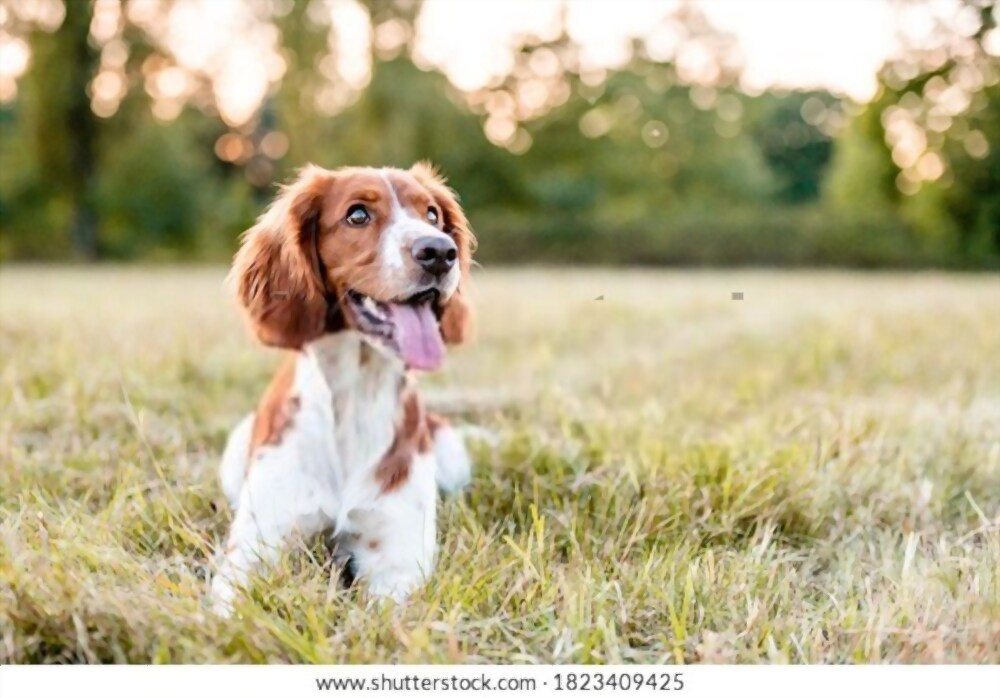 Get The New Dog - Things to Consider When Selecting a Dog Breed