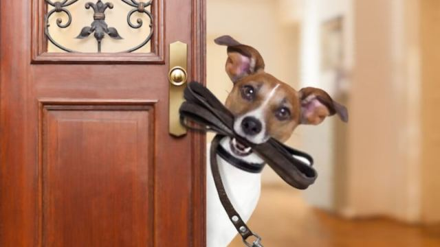 Ready to Welcome a New Pet Home?