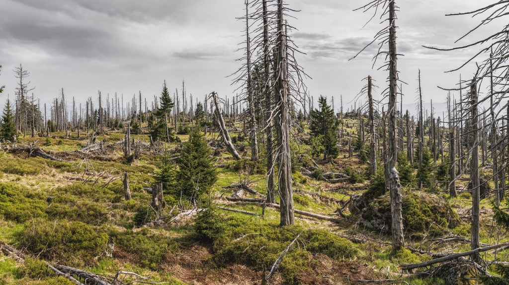 Forest | The Role of ISO 14001 in Environmental Management Blog | Best Practice