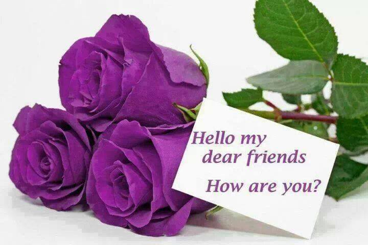 purple rose stylish flowers facebook profile pictures