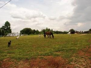 lake norman farm