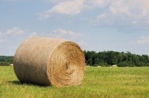 Round Bale of Hay in North Carolina