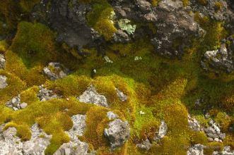 Daisetsuzan - volcanic stones - 6