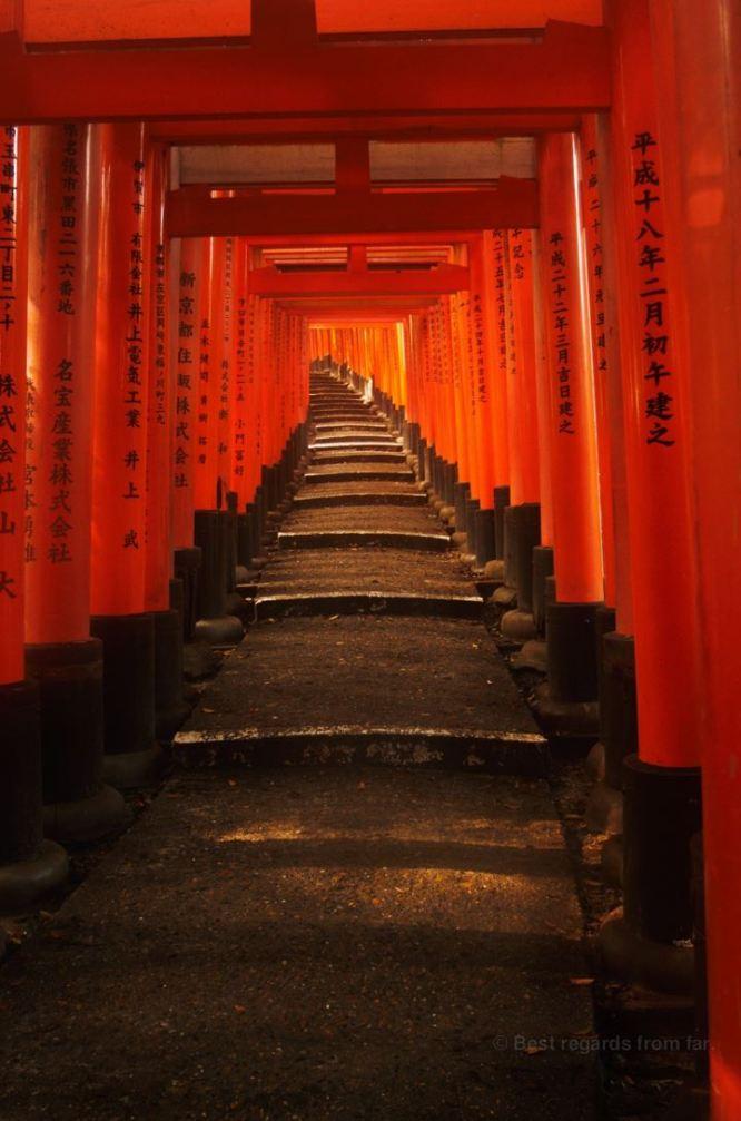 A few of the toris at Fushimi inrari, Kyoto