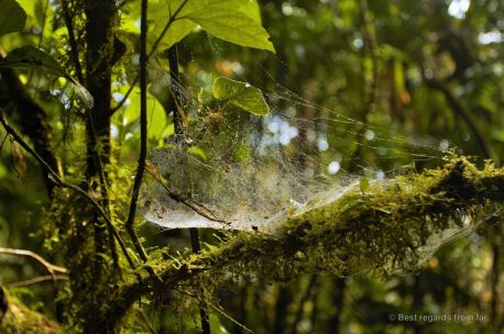 The humidity in the cloud forest is always visible, Mombacho, Nicaragua