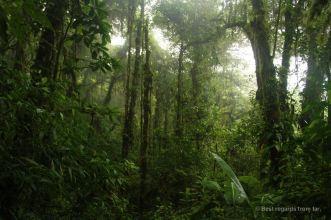 The mystical Santa Elena Cloud Forest, Costa Rica