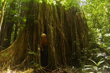 Lost in the strangler fig during the Lost and Found treasure hunt, Panama