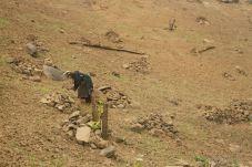 Working the opium fields, Akha village trekking, Laos