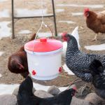 Best Heated Chicken Waterer reviews